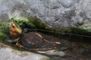 Napier_Aquarium003