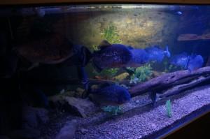 Napier_Aquarium005