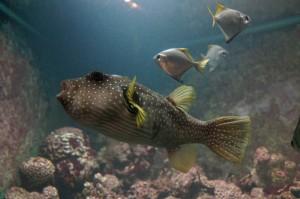 Napier_Aquarium007