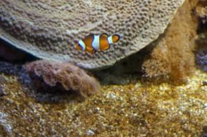 Napier_Aquarium008