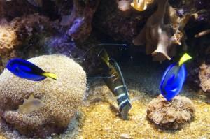 Napier_Aquarium009