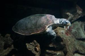 Napier_Aquarium012