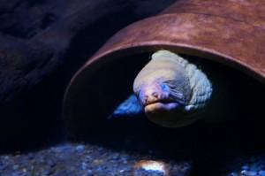Napier_Aquarium013