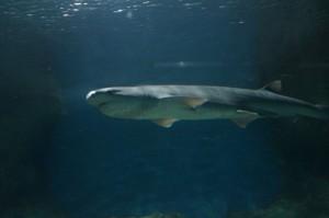Napier_Aquarium015