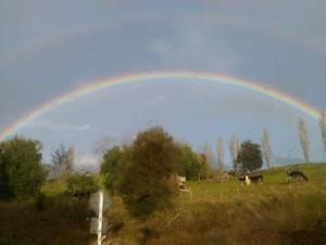 Regenbogen001