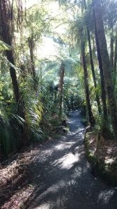 Whangarei_Falls02
