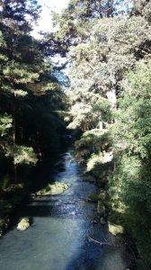 Whangarei_Falls09