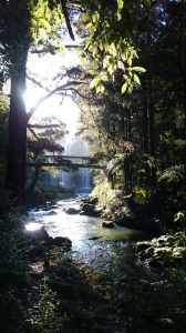 Whangarei_Falls12