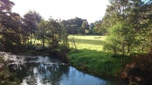 Whangarei_Falls14