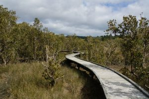rawene_mangrove_walkway01
