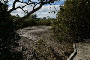rawene_mangrove_walkway02